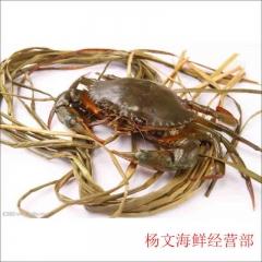 肉蟹  约450g-550g  为保证鲜活,今日21点前下单,预计次日9点至11点送达